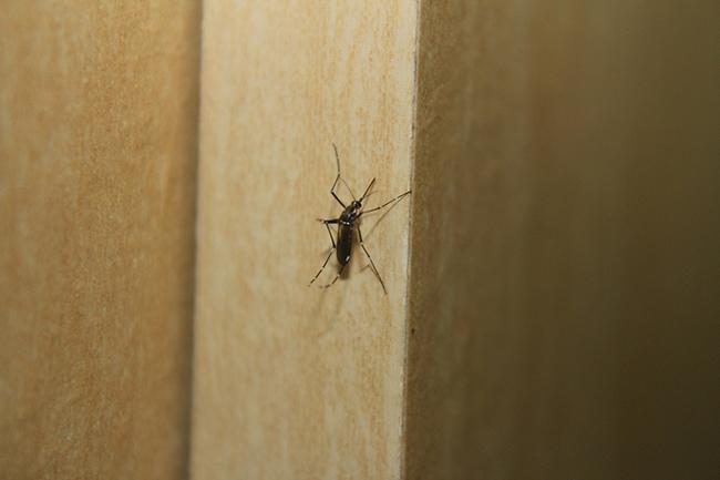 mosquito_1280